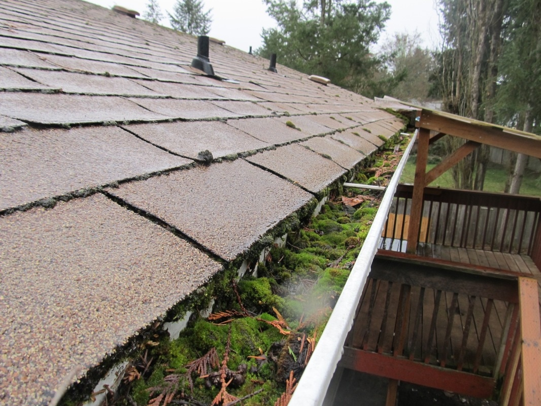 Gutter clogged with moss and organic debris.