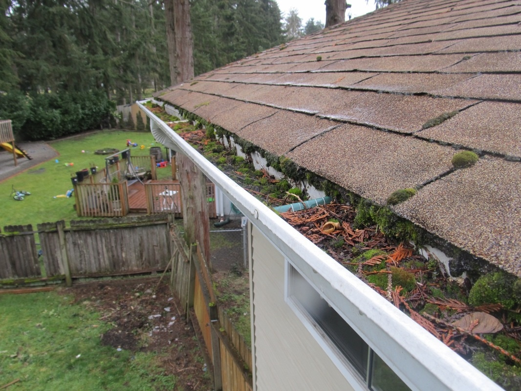 Clogged gutters full of pine needles and moss.
