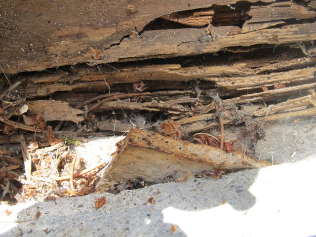 Rotting sill plate and rim joist